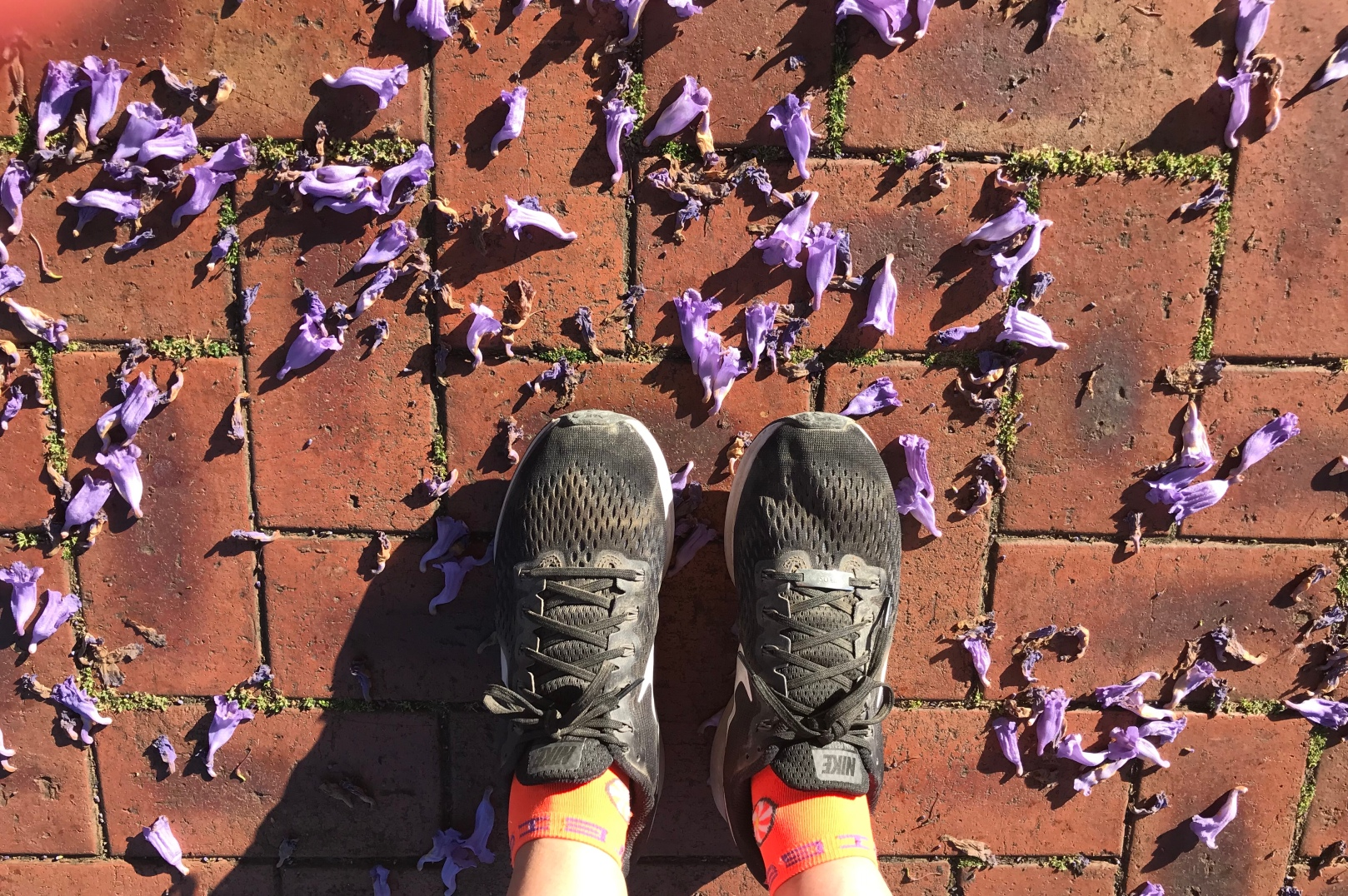 walking, australia, endurance, jacaranda, walk,