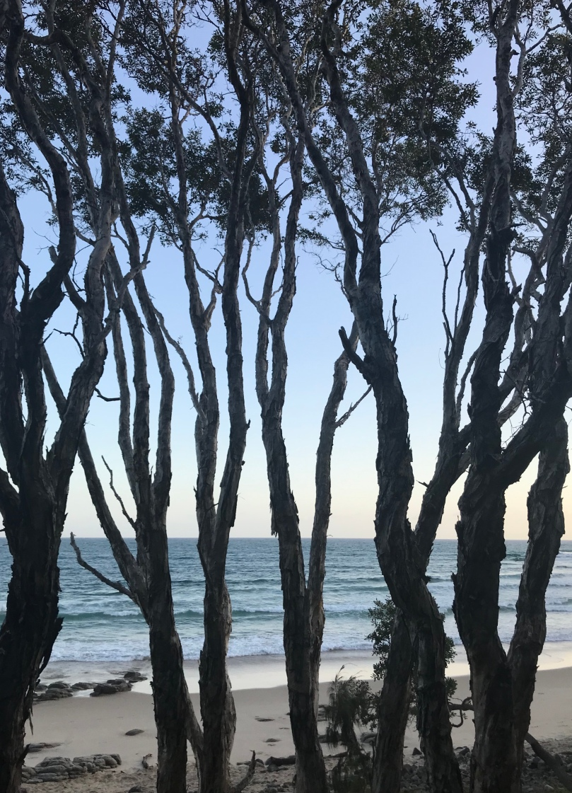 Noosa National Park running walking trail view Queensland Australia trees beach ocean