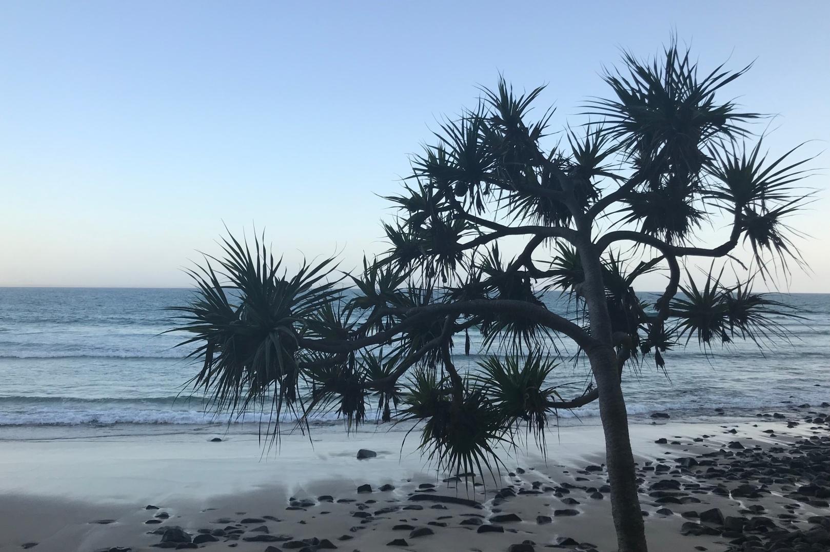 Noosa National Park running walking trail view palm tree beach